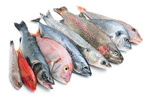 السمك لتكبير الذكر